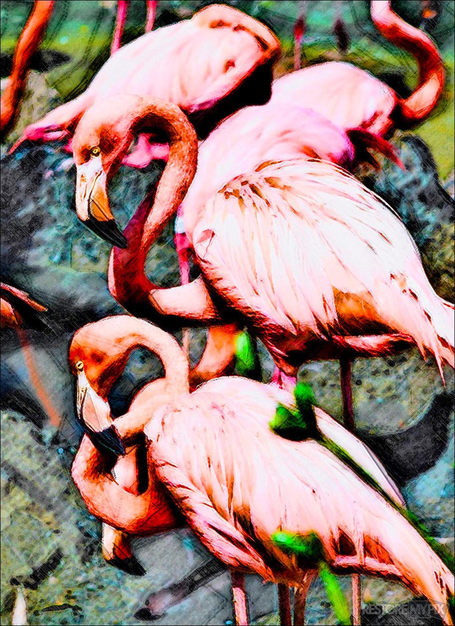 Drawing-Flamingo copy